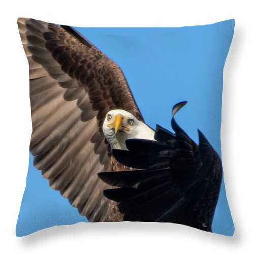Eagle Mesmerized In Flight - Throw Pillow