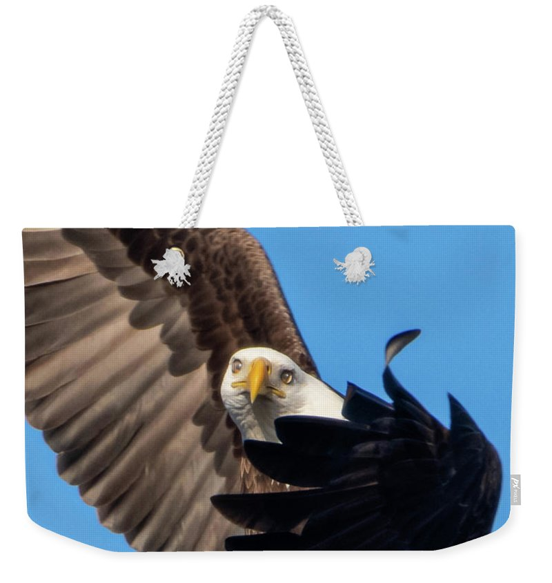Eagle Mesmerized In Flight - Weekender Tote Bag