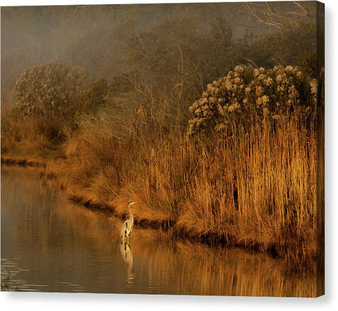 Early Morning In Chincoteague - Canvas Print