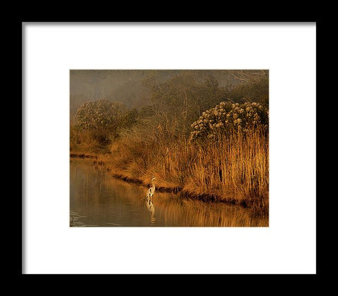 Early Morning In Chincoteague - Framed Print