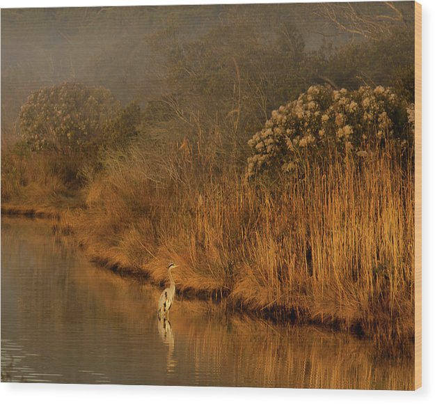 Early Morning In Chincoteague - Wood Print