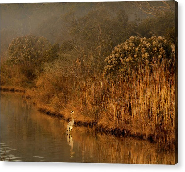 Early Morning In Chincoteague - Acrylic Print
