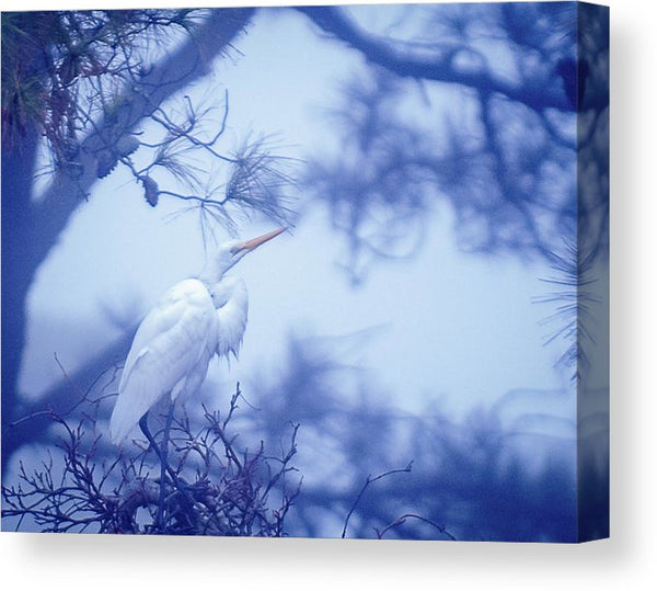 Egret On A Foggy Morning - Canvas Print