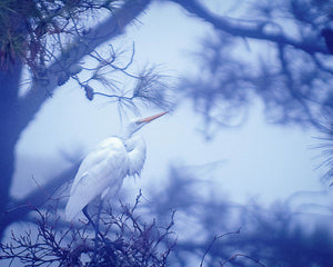Egret On A Foggy Morning - Art Print