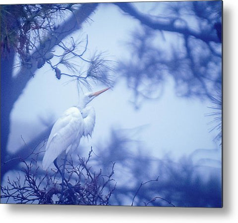 Egret On A Foggy Morning - Metal Print