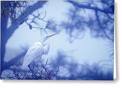 Egret On A Foggy Morning - Greeting Card