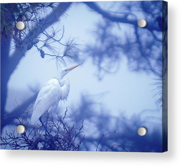 Egret On A Foggy Morning - Acrylic Print