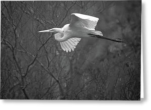 Egret Soaring Through The Fog - Greeting Card
