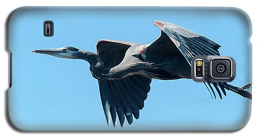 Great Blue Heron In Flight - Phone Case