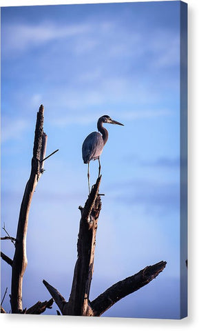 Great Blue Heron On High - Canvas Print