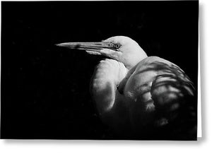 Great Egret In The Shadows - Greeting Card