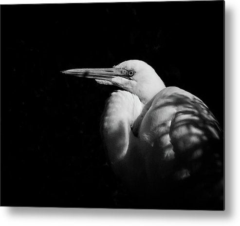 Great Egret In The Shadows - Metal Print