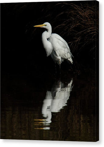 Great Egret Reflection - Canvas Print