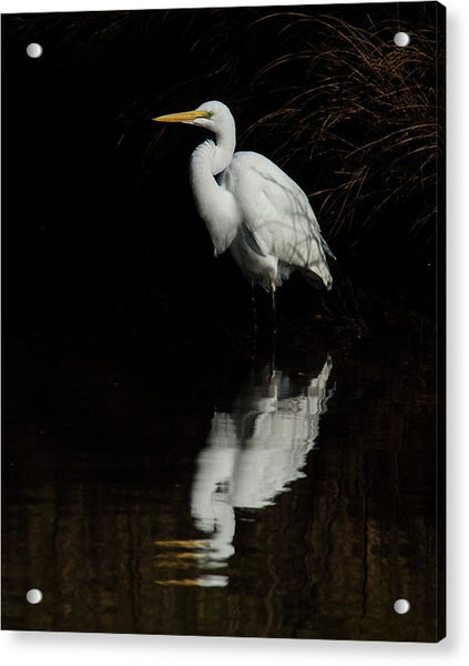 Great Egret Reflection - Acrylic Print