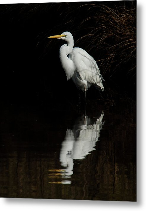 Great Egret Reflection - Metal Print