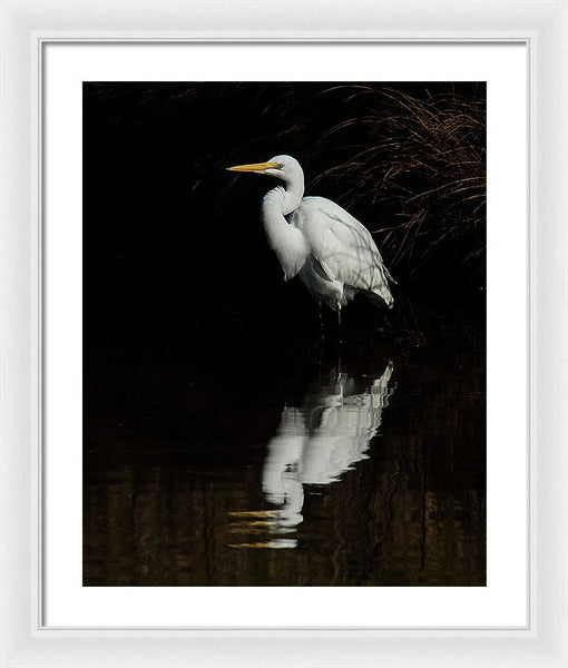 Great Egret Reflection - Framed Print