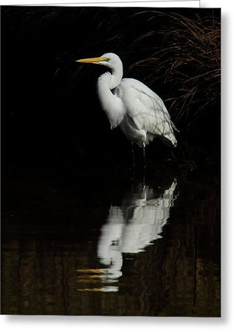 Great Egret Reflection - Greeting Card