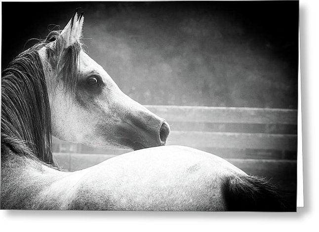 Grey Arabian In Black And White - Greeting Card