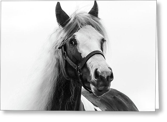 Gypsy Cob Paint - Greeting Card