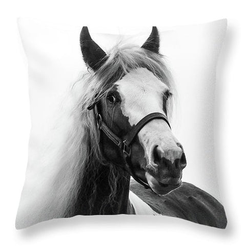 Gypsy Cob Paint - Throw Pillow