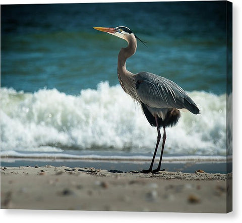 Heron Beach Life - Canvas Print