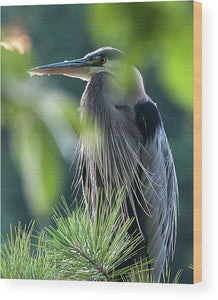 Heron In Hiding - Wood Print