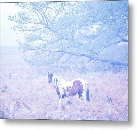 Looking Through The Fog - Metal Print