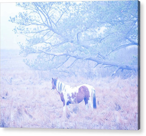 Looking Through The Fog - Acrylic Print