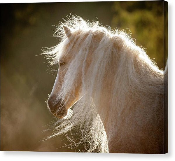 Mane Of Gold - Canvas Print