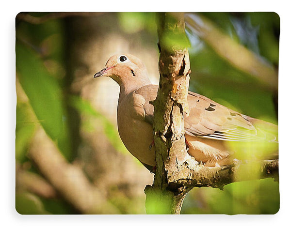 Mourning Dove In The Leaves - Blanket