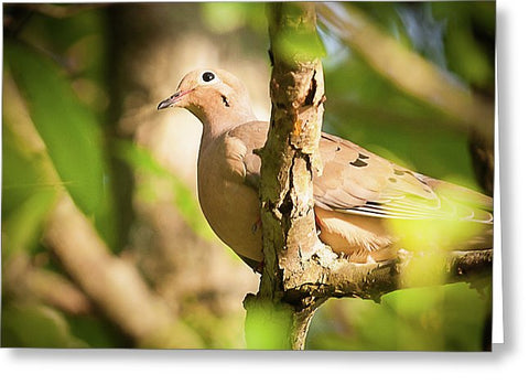 Mourning Dove In The Leaves - Greeting Card