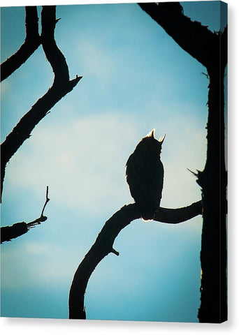 Owl Silhouette - Canvas Print