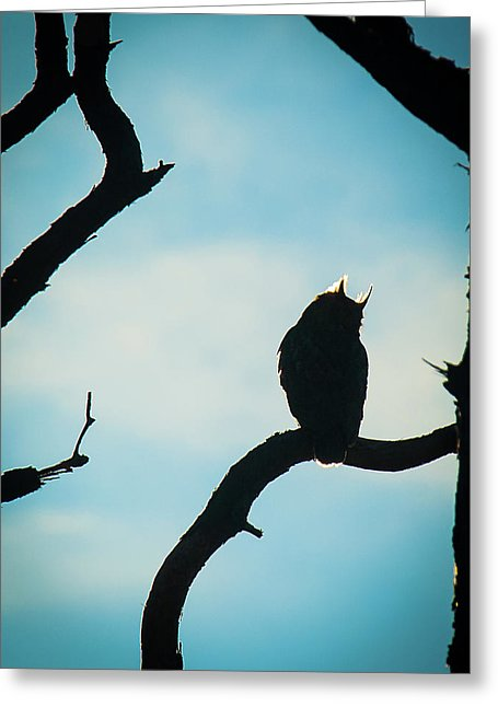 Owl Silhouette - Greeting Card