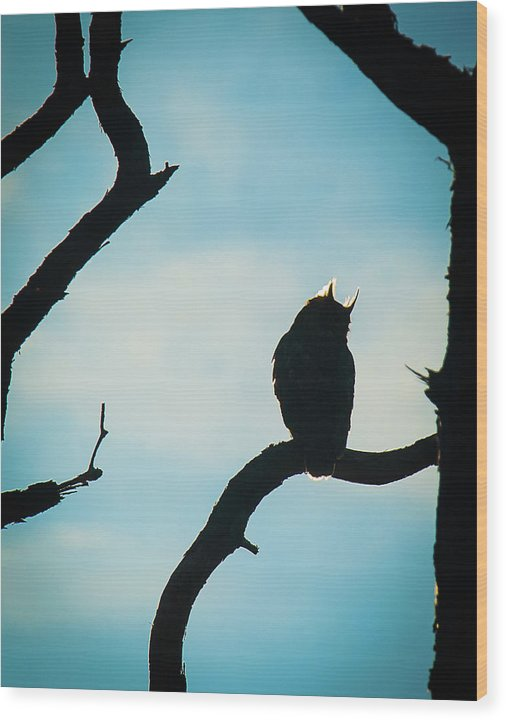 Owl Silhouette - Wood Print