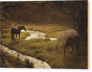 Peace and Stillness - Horse Life - Wood Print