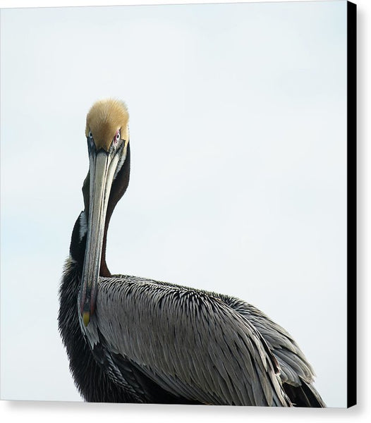 Pelican Prowess - Canvas Print