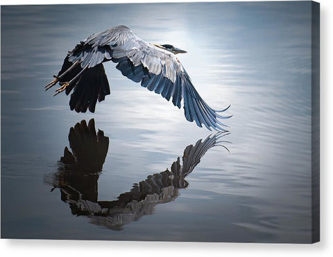 Reflections On Flight - Canvas Print