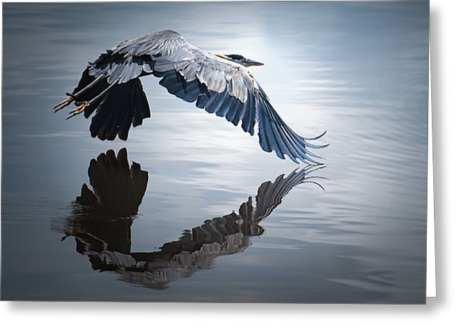 Reflections On Flight - Greeting Card