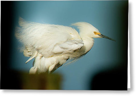 Snowy Egret Perched On A Windy Dock - Greeting Card