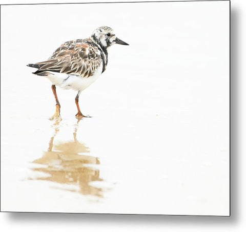 Taking A Stroll - Ruddy Turnstone - Metal Print