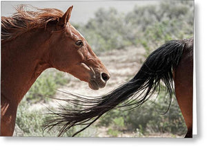 The Beginning and the End - Horse Life - Greeting Card