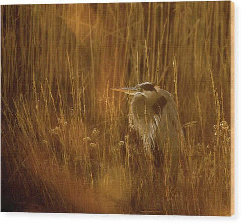 The Golden Great Blue Heron - Wood Print