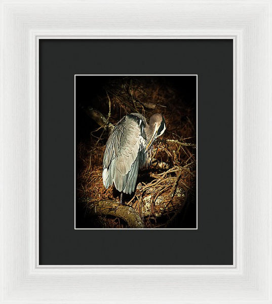 The Grooming Of A Great Blue Heron - Framed Print