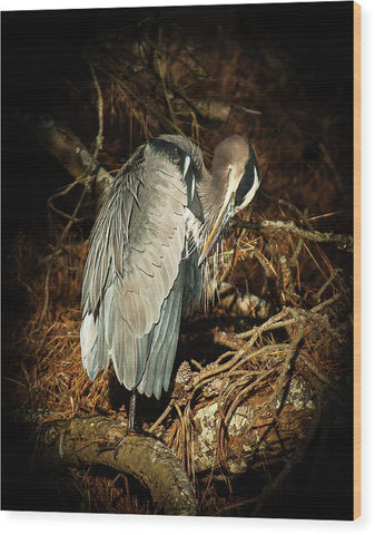 The Grooming Of A Great Blue Heron - Wood Print