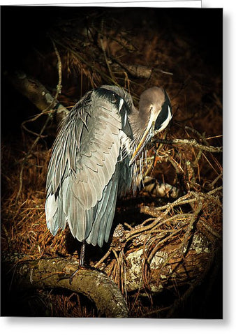 The Grooming Of A Great Blue Heron - Greeting Card
