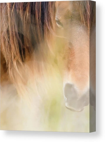 The Soul Of A Wild Horse - Canvas Print