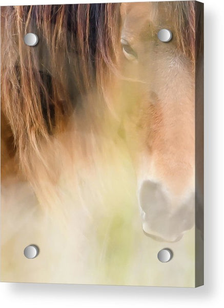The Soul Of A Wild Horse - Acrylic Print