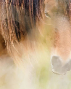 The Soul Of A Wild Horse - Art Print