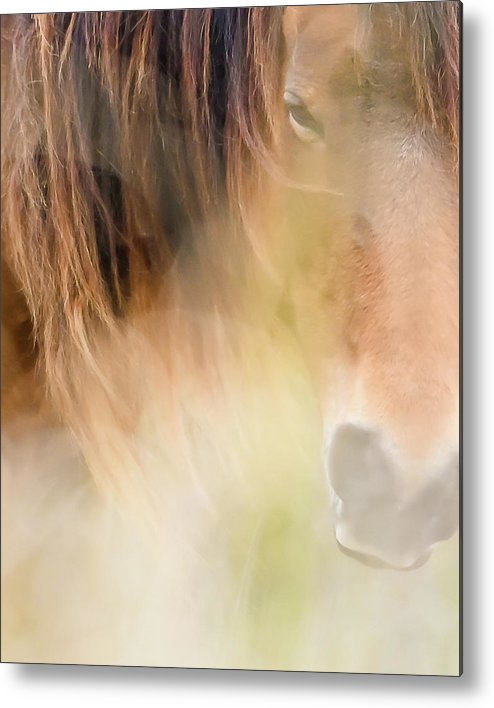 The Soul Of A Wild Horse - Metal Print
