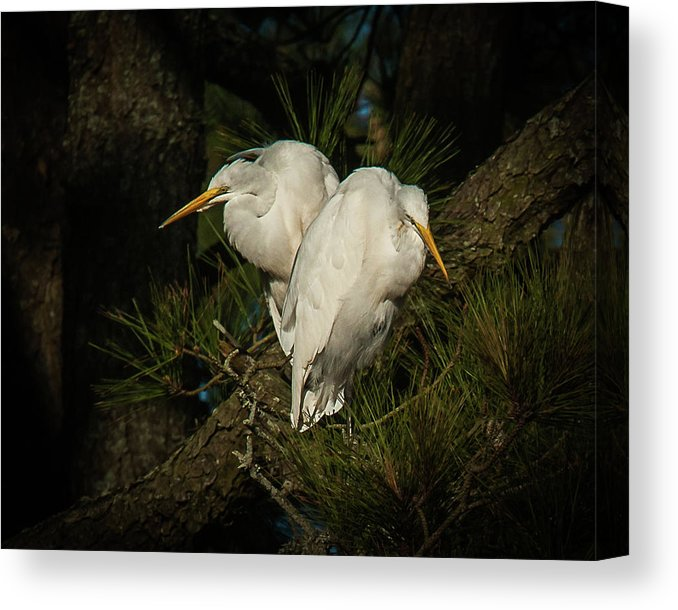 Two Of Hearts Egret Pair - Canvas Print